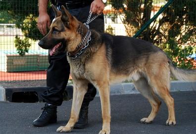 Agent conducteur de chien